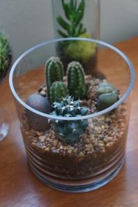 terrarium - desert 2