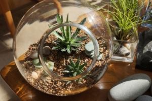 terrarium - desert