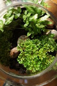 terrarium - ferns, inside