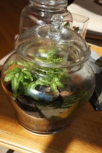 terrarium - ferns