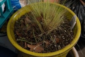 Plants - garage wintering