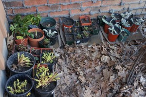 Plants - sale 3