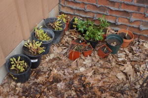 Plants - sale 2