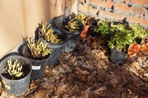 Plants - sale 1
