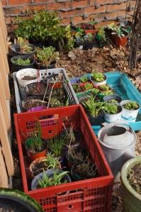 Plants - sale 4