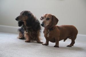 Hudson and Charle