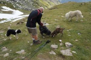 Travel - TMB Dogs 8