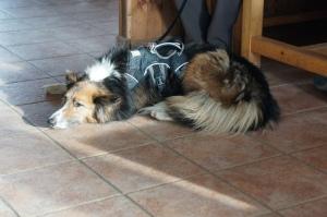 Travel - TMB Dogs 7
