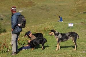 Travel - TMB Dogs 5
