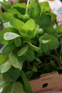 Plants - Mint Harvest