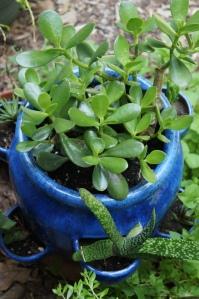 Plants - Garden 3