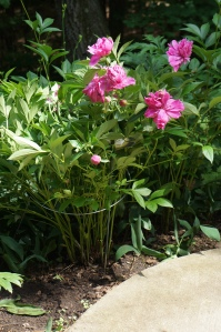 Plants - Garden 4