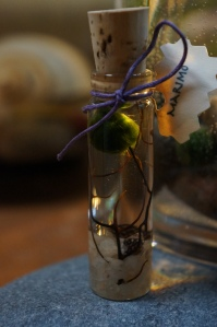 Plants - Tiny Marimo 2
