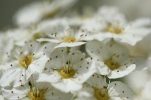 Photography - Garden 3