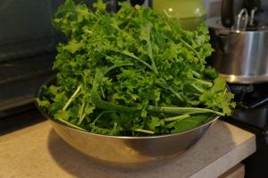 Food - Lettuce harvest