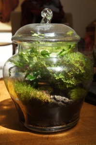 Plants - Terrarium Maintenance 1