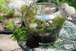 Plants - Terrarium Maintenance 3
