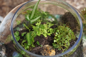 Plants - Terrarium Maintenance 2