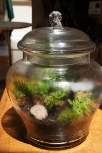 Plants - Terrarium Maintenance 4