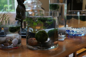 Plants - Marimo update
