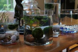 Plants - Marimo update