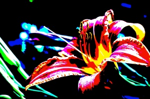 Photography - special effects day lilly