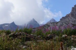 Travel - TMB mountains/flowers/clouds