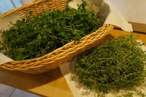 Plants - Oregano and Lemon Thyme