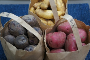 Food - Farmer's Market Potatoes 1