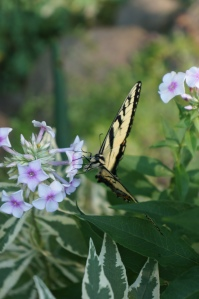 Photography - Butterfly