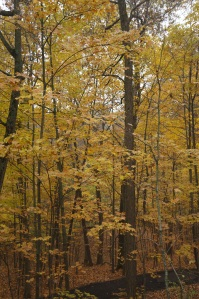 Photography - Fall Forest