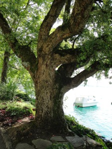 Travel - Cork Tree 2